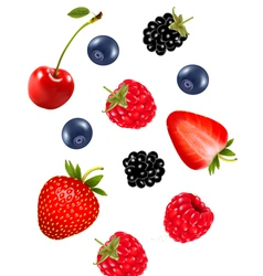 Set of juicy berries vector image vector image