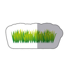 colorful grass with leaves icon vector image