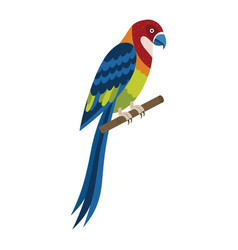 Eastern rosella colorful exotic parrot in flat vector