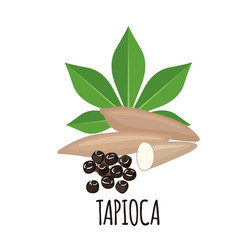 Tapioca plant icon with leaf and roots in flat vector