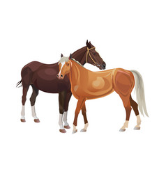 Two horses standing together vector