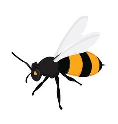 Honey bee c vector image vector image