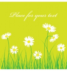 cute chamomile floral background vector image