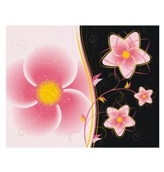 Floral ornament on a black background vector image