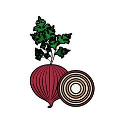fresh onion and slice plant organ food vector image