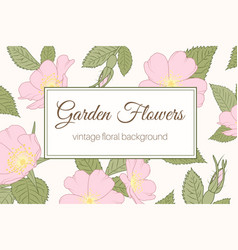 Garden flowers wild rose vintage banner background vector