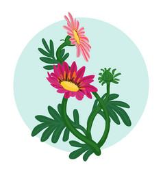 gazania flowers isolated vector image