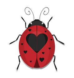 Heart ladybug vector