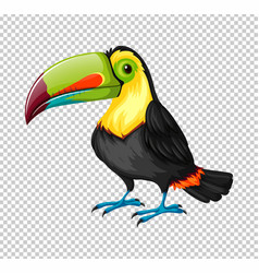 Toucan bird on transparent background vector
