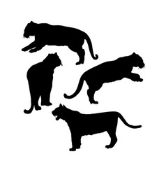wild tiger silhouettes isolated set safari vector image