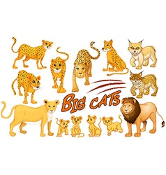 Different kind of lion and tiger vector image vector image