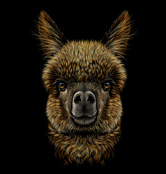 Alpaca llama portrait vector