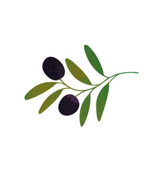 Decorative branch with black olives and vector