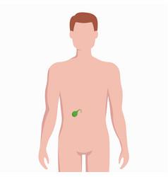 Gallbladder on man body silhouette medical vector