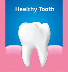 Healthy tooth with gum dental care concept vector