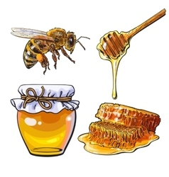 Jar of honey bee dipper and honeycomb on white vector image