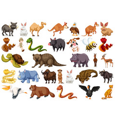 Set wild animals vector