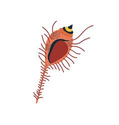 tropical marine underwater aquatic seashell vector image
