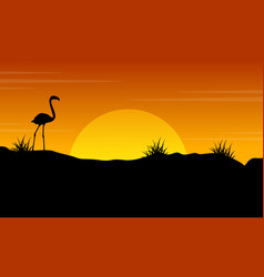 beauty scenery flamingo at sunset silhouette vector image vector image