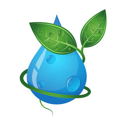 Drop of water and green leaves eco symbol vector