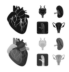 body and human icon set of vector image