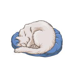 cute white cat pet animal sleeping on carpet rug vector image