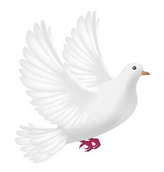 flying white pigeon on a white background vector image
