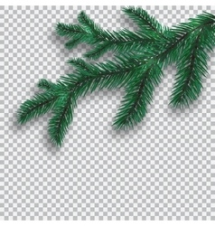 Green Blue realistic tree branch and its shadow vector