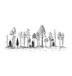 Panoramic view forest from different trees vector