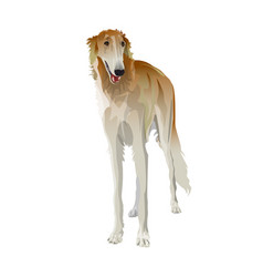 russian borzoi dog vector image