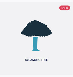 two color sycamore tree icon from nature concept vector image