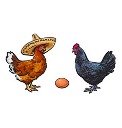 brown egg chicken and rooster sketch set vector image