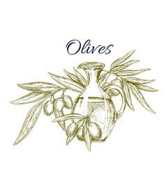 olive oil jug with fruit on branch sketch vector image vector image