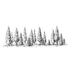 panoramic view of the forest from cypress trees vector image