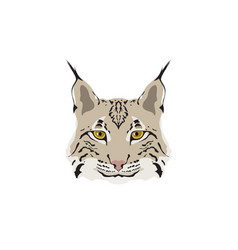 head of lynx isolated on white background vector image