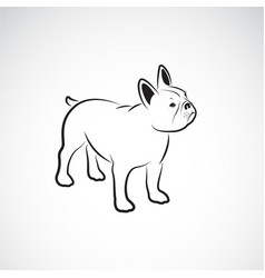 Bulldog design on white background pet animals vector