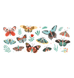 collection elegant exotic butterflies and moths vector image