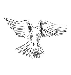 Hand sketch flying dove vector