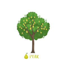pear garden fruit tree with name vector image