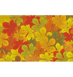 autumn horse chestnut leaves backgroun vector image