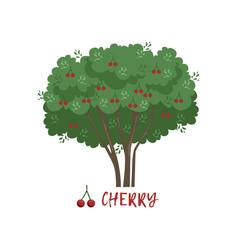 Cherry garden berry bush with name vector