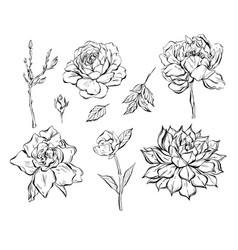 hand drawn abstract graphic ink flowers vector image vector image