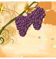 bunches vector image vector image