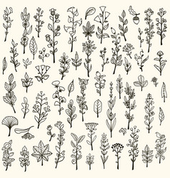 collection of handdrawn doodle herbs and flowers vector image