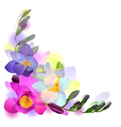 Greeting background with freesia flowers vector image