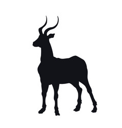 black silhouette african gazelle vector image