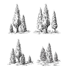 Set of hand-drawn cypress vector