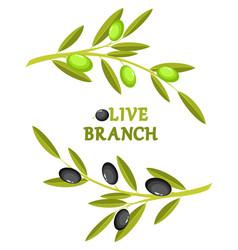 Olive branch wreath vector