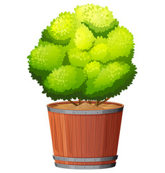 a plant in pot vector image