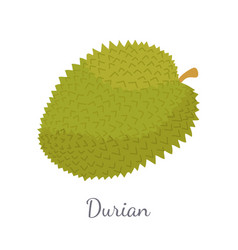 Durian exotic juicy thailand malaysia fruit icon vector